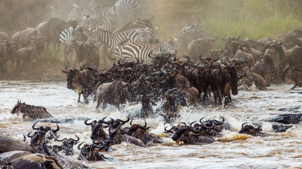 Wildebeest Migration Kenya safari destinations