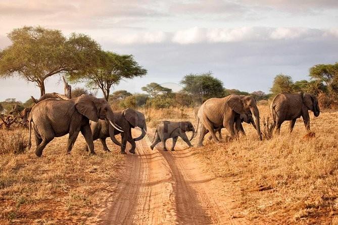 5 Days Mount Kenya Safari