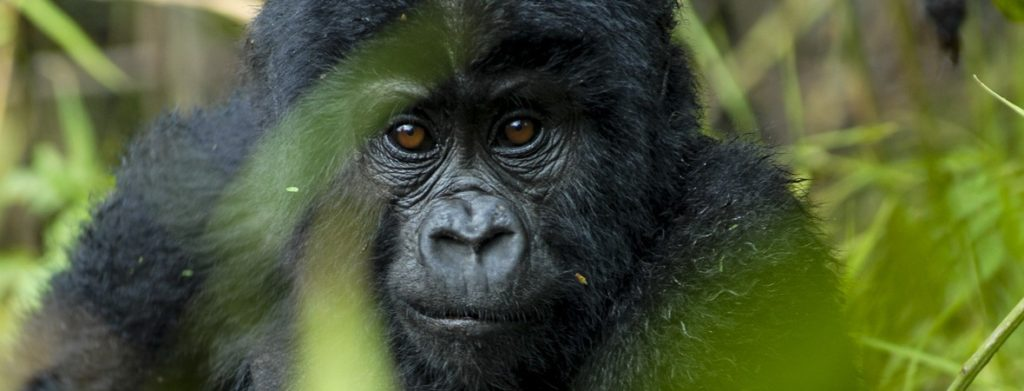 15 Days Ultimate Wildlife Safari to the Great Kenya and Uganda