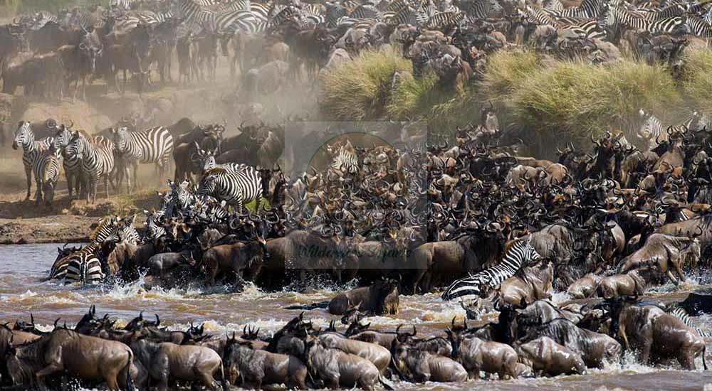 11 Days East Africa Safari