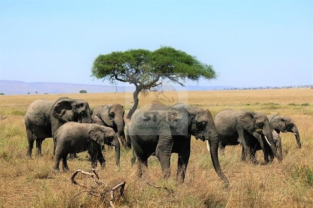 3 Days Rwanda Bird Watching Safari