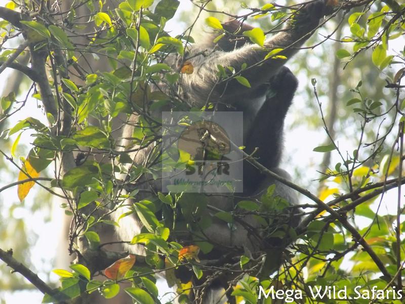 4 Days Primates Tour Uganda