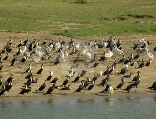Lake Edward Uganda