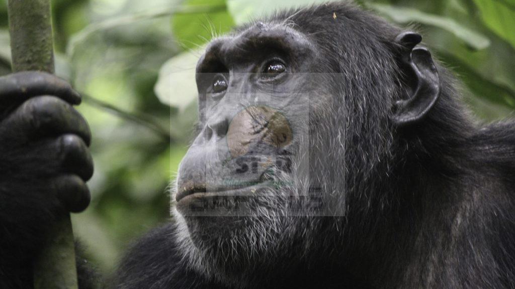 9 Days Uganda safari
