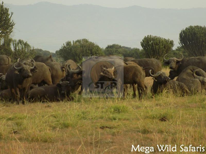 4 Days Kenya Wildlife Safari
