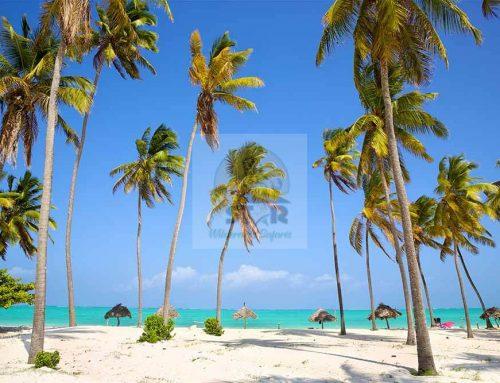 Zanzibar Holiday Safari